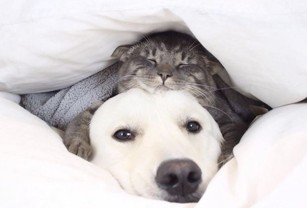 cat-and-dog-under-blanket