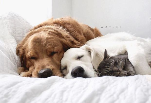 cute-dog-and-cat-napping-11
