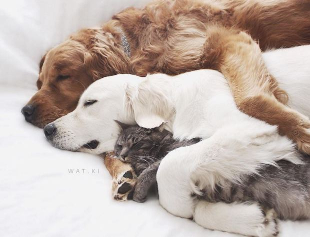 dogs-and-cat-spoon-spoon